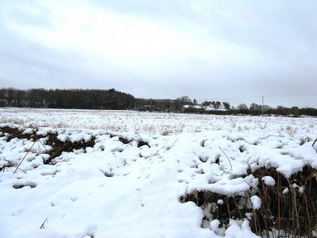 Snow laden bracken beside Duke's Road