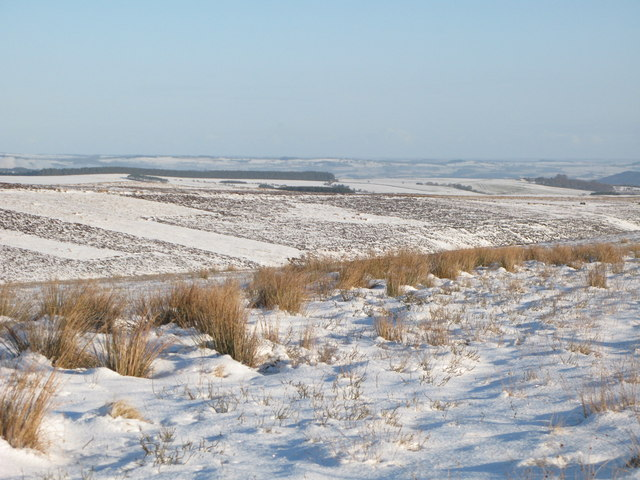 The snowy cleugh of Lawsley Sike