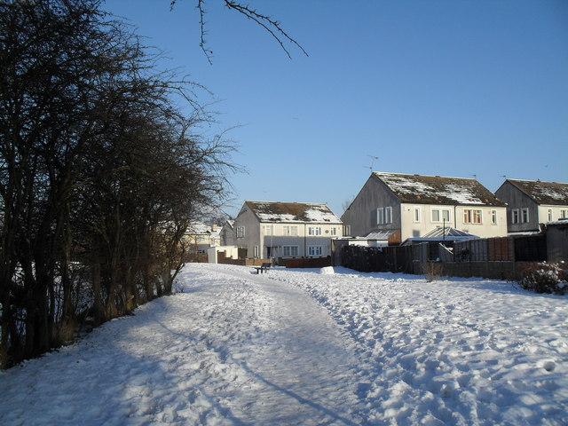 Snowy path through The Oaks