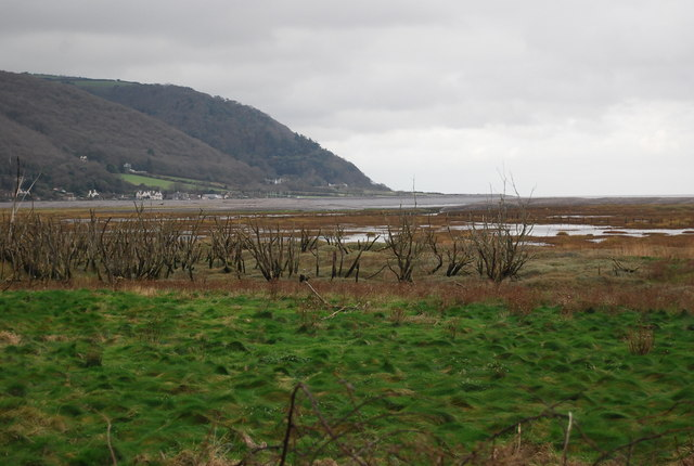 Dead trees, the marsh, Porlock Weir