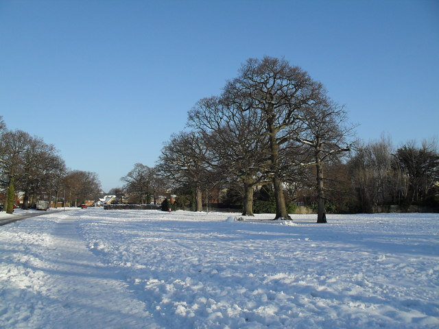 Winter trees in Riders Lane