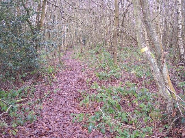 Footpath in open land near Hook Green