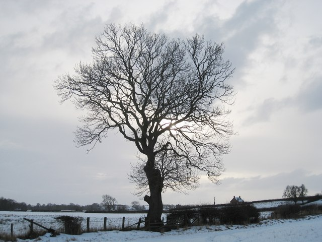 Tree against a wintery sky