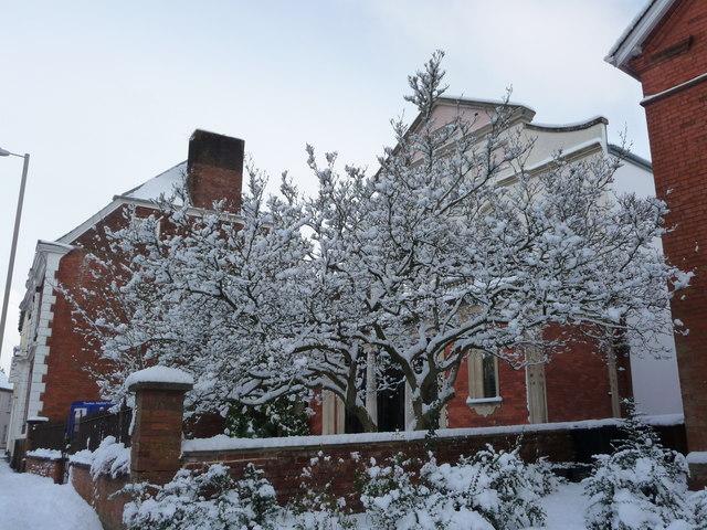 Tiverton : Methodist Church Tree