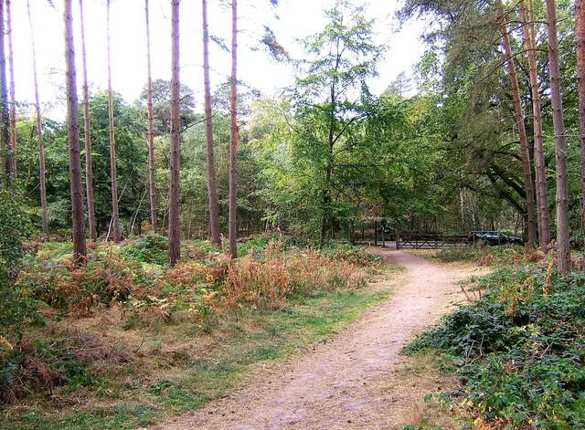 "Public bridleway in ""The Million"" wood"
