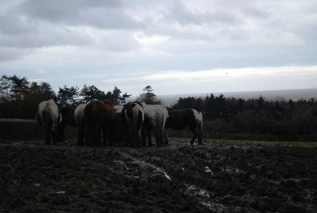 Horses feeding, West Porlock