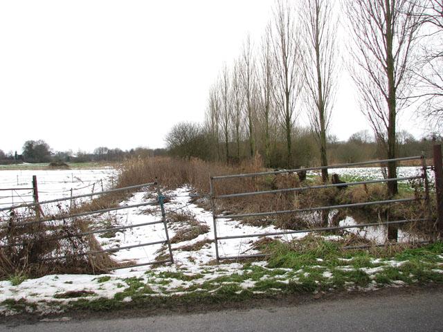 Overgrown dike east of Carleton Beck