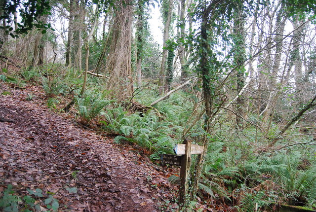 Footpath junction in the woods