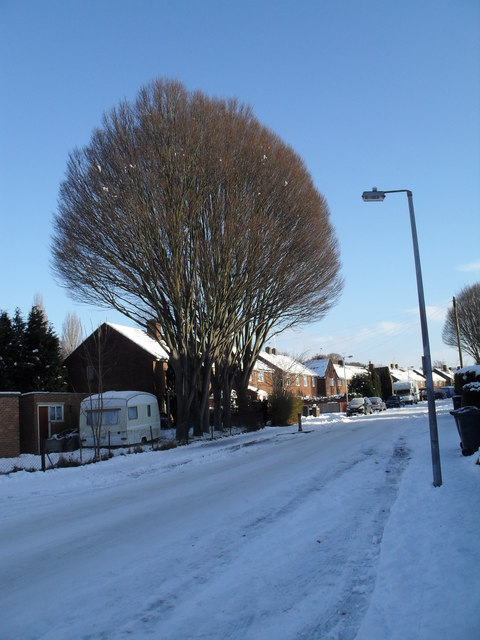 Winter trees in High Lawn Way
