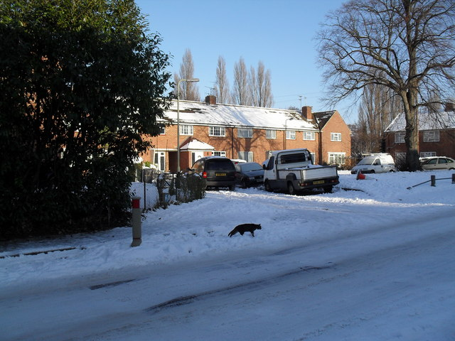 Black cat in High Lawn Way