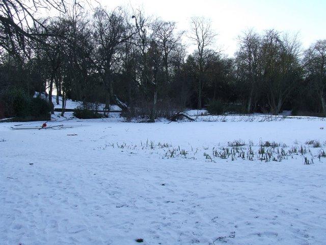 Frozen pond in Queens Park