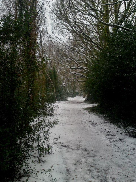 Pathway through Prior Hill Copse