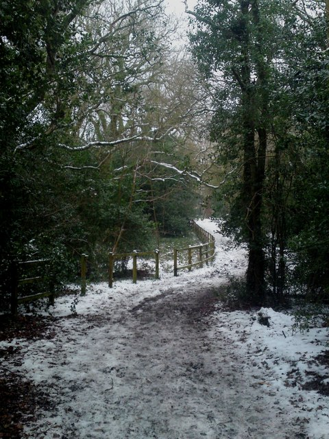 Priors Hill Copse Woodland Public Footpath