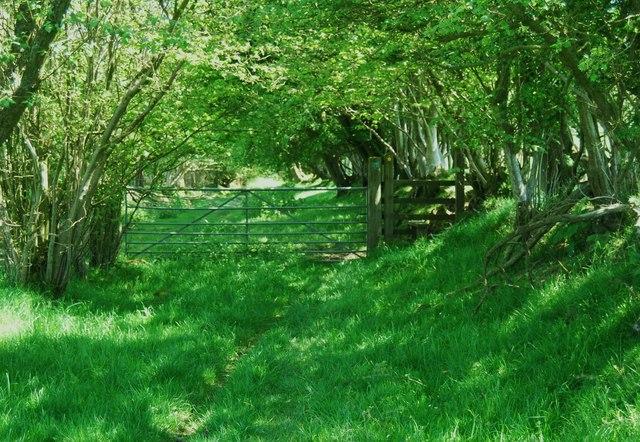 Taith Clwyd at Nant-y-madwen