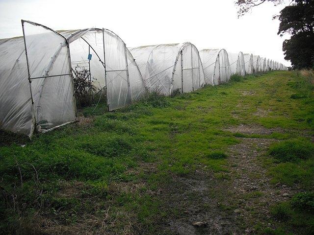 Polytunnels, East Scryne