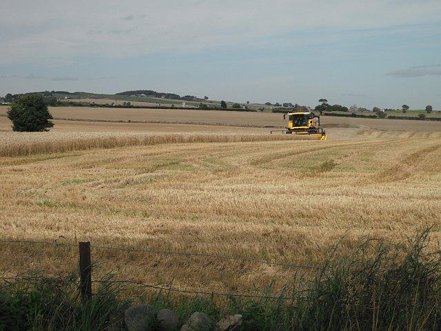 Barley harvest, West Scryne