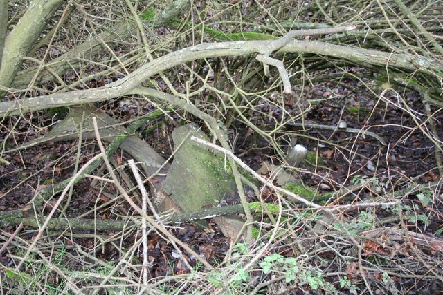 Body parts in the undergrowth
