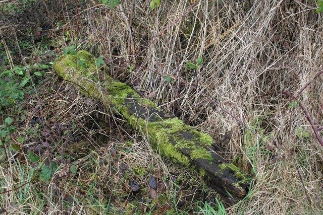 Moss covered sleeper