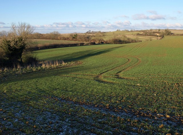 Winter cereal on Birch Hill (4)