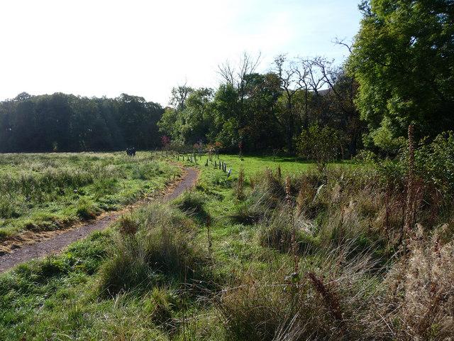 Pilgrimage pathway on Luss Glebe