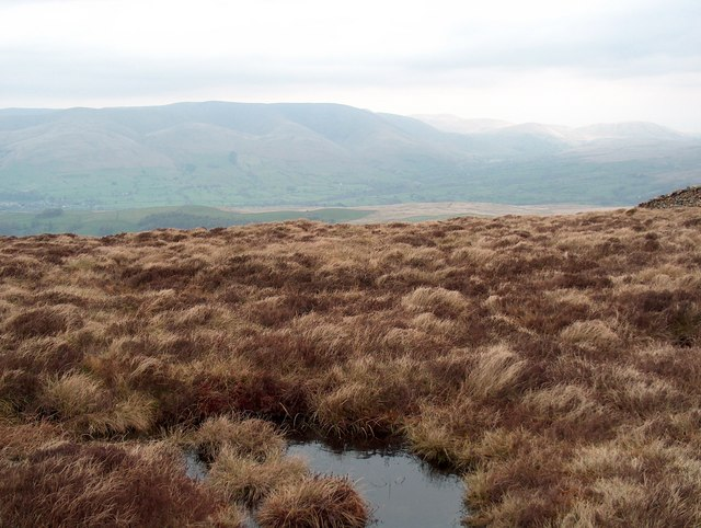 Boggy puddle on Combe Top