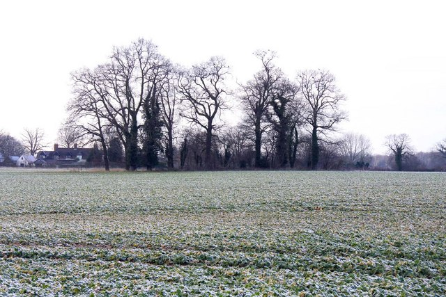 Copse in a field at Clifton Hampden