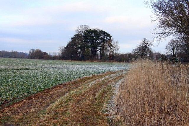 Arable field at Clifton Hampden