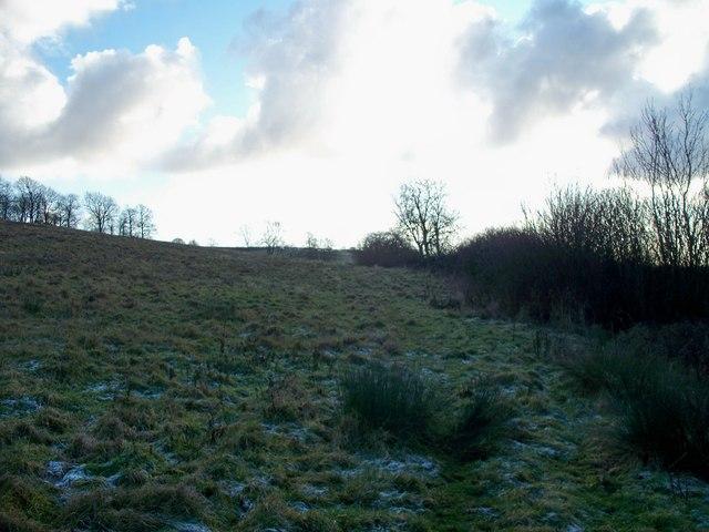 Path in rough pasture