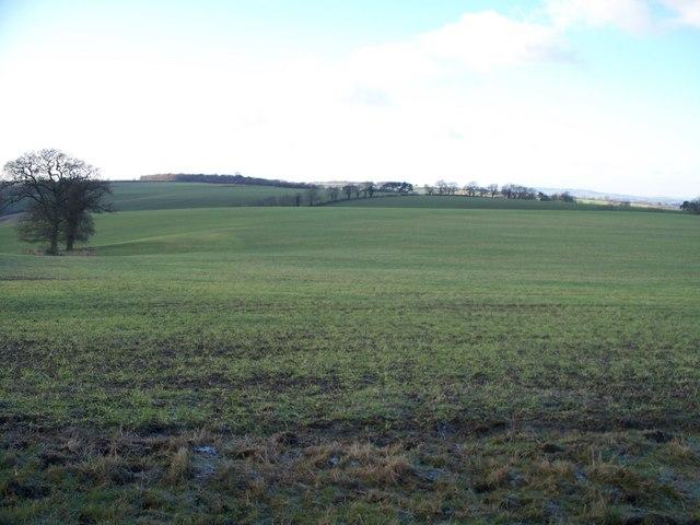 Whichford Hill farmland