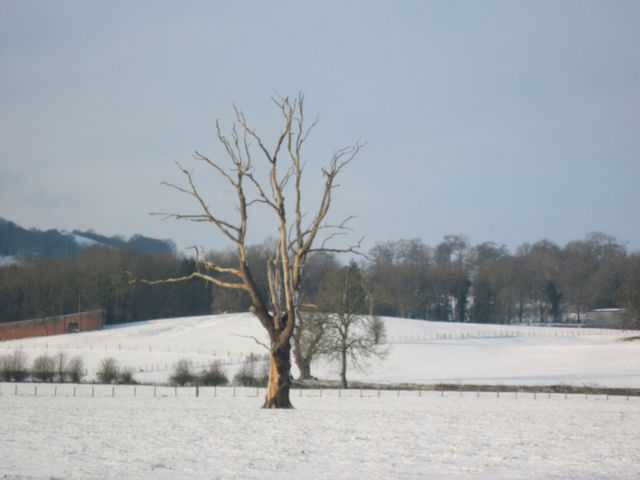 Bare tree in snowy landscape