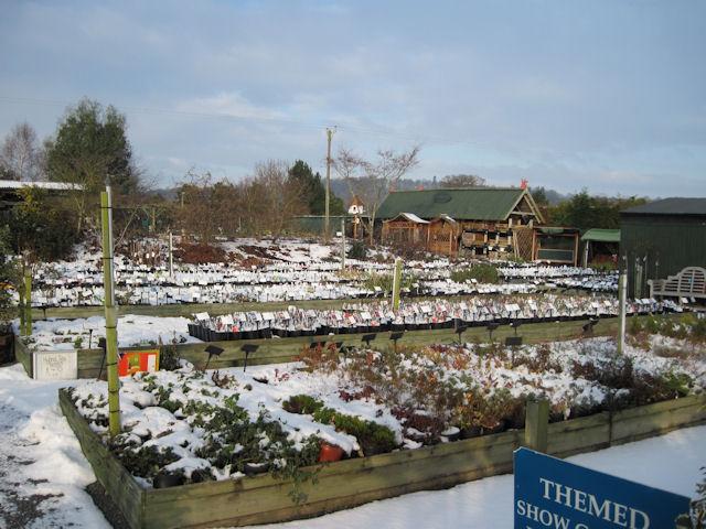 Derwen Garden centre in the snow