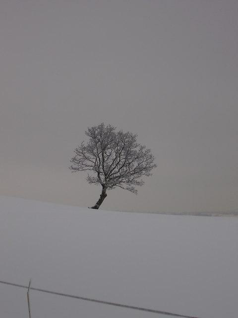 Tree near Hollin edge farm