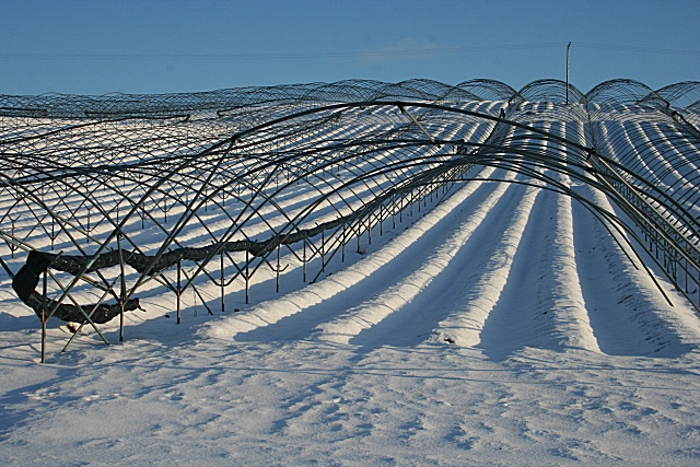 Strawberry Fields in Winter