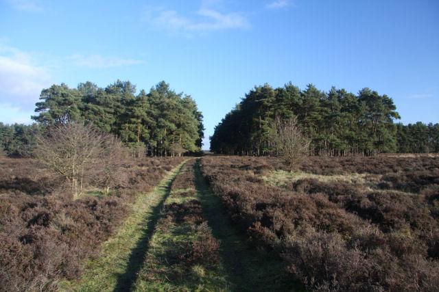 Track to Benjamin's Hurst