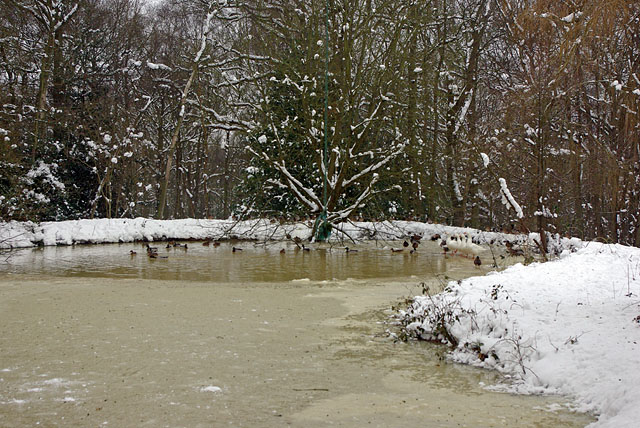 Partly frozen duck pond