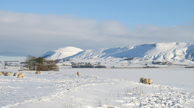 Sheep beside Loch Leven