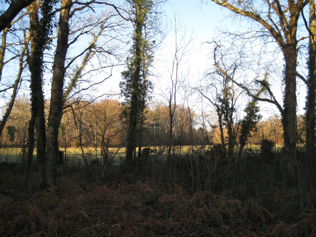 Woodland and meadow west of Chudleigh Knighton Heath