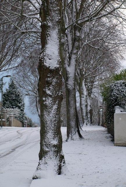 Trees, Parkhurst Road, Torquay