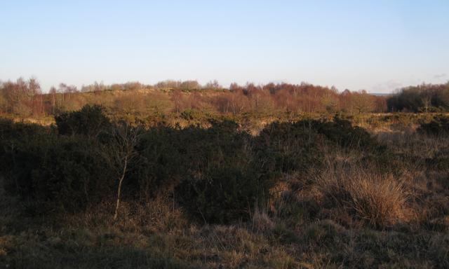 Chudleigh Knighton Heath west