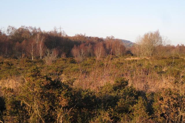 Chudleigh Knighton Heath west (2)