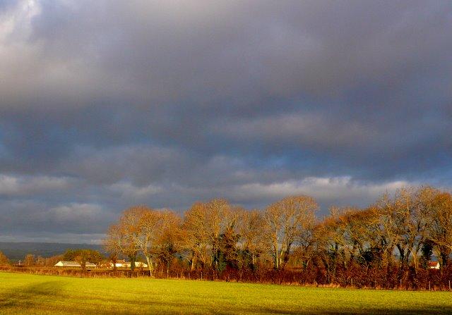 Fields near Catcott