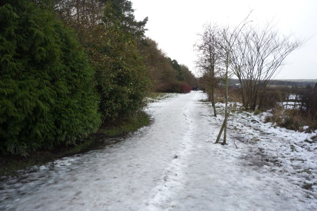 Path to Harlow Carr