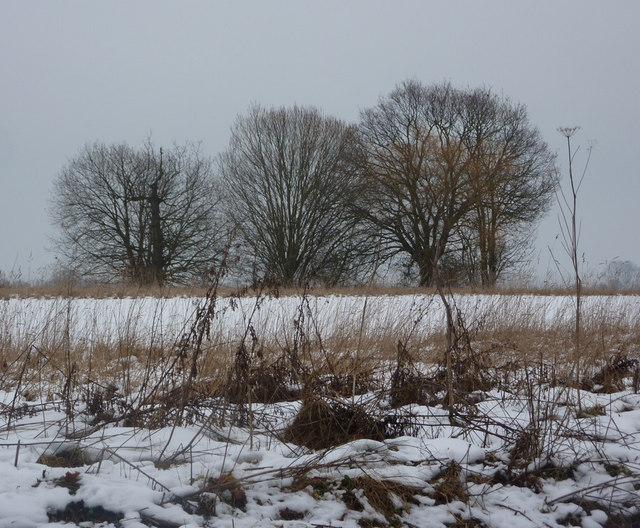 Wintry scene near Elmsett