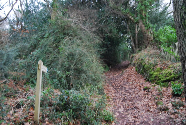 Footpath off Luccombe Lane