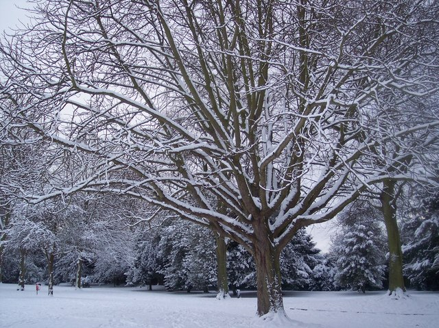 Snow covered trees in Gillingham Park