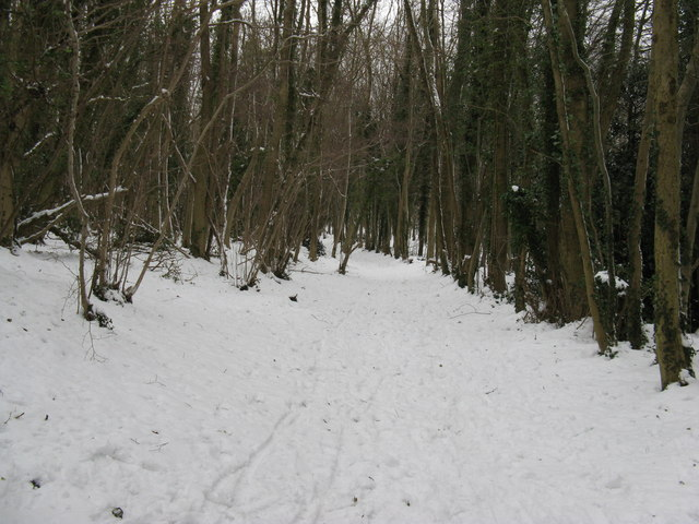 Bridleway north through Nore Wood