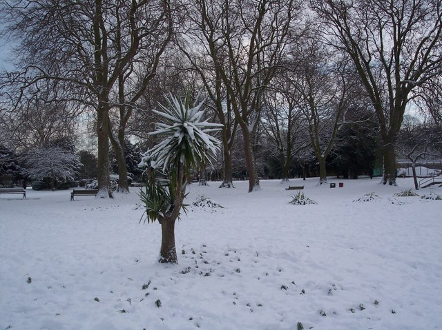 Snow covered flower borders in Gillingham Park