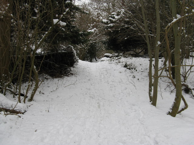 Bridleway climbing Nore Hill in Nore Wood