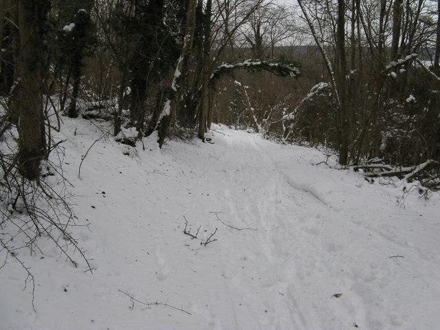 Bridleway descending Nore Hill