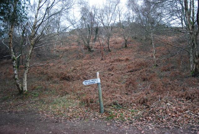 Bridleway Signpost, Luccombe Lane